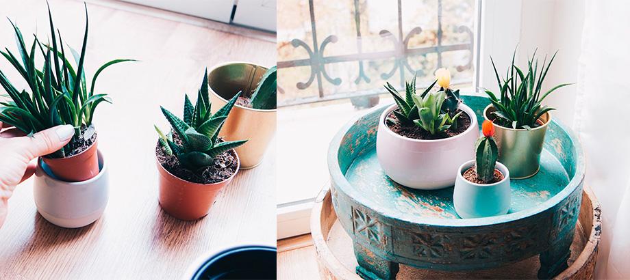 como_cuidar_los_cactus_en_el_interior_0